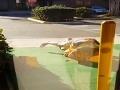 Keď telo ovládne vášeň: Poznali sa pár minút, skočili na seba a súložili na chodníku!