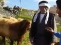 Dramatické VIDEO z pastviny: Na farmára zaútočil v priamom prenose žiarlivec!