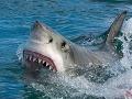 Fenomenálny únik z čeľustí žraloka: Mladík takto porazil 3,5-metrové monštrum, ktoré sa ho snažilo zabiť!