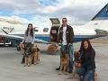 Zvieracia láska nepozná hranice: Teraz už aj vďaka pilotom s dobrým srdcom!