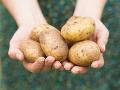 Do továrne priviezli náklad zemiakov z Francúzska: Takýto objav v ňom zamestnanci nečakali