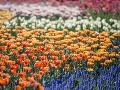 Alergici, pozor: Peľová sezóna sa podľa odborníkov končí