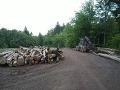 Les v ohrození: VLK blokuje ťažbu dreva na Čergove, padli aj trestné oznámenia