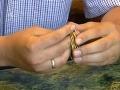 Roľník sa išiel pozrieť na obilie a aha: Našiel 3000-ročný zlatý poklad!