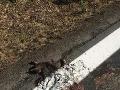 Naši cestári sa prekonali: FOTO nechutnosti, striekajú cez mŕtvoly, doslova!