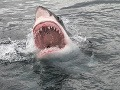 Mladík sa stretol tvárou v tvár so žralokom: VIDEO jeho reakcie, akú by ste nečakali