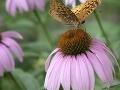 Alergici, pozor: Peľová sezóna sa podľa odborníkov chýli k záveru