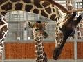 Američka dodržala to, čo sľúbila zosnulému manželovi: Zoo v Kolíne nad Rýnom zdedí milióny dolárov