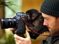 FOTO zvedavcov, ktorí fotografom strpčujú život: Kto by čakal toľko zábavy v práci?