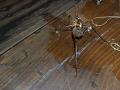 O dôvod viac, prečo nechať hmyz žiť: Po zabití cvrčka prišlo nechutné prekvapenie