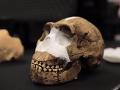 V tajomnom hrobe objavili nový druh človeka: Mali sa dostať do smrteľnej pasce bez šance úniku