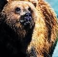 Sprej na odplašenie medveďov už aj na Slovensku
