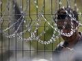 Slovinsko pokračuje s výstavbou plota proti migrantom: Ich počet totiž začal opäť narastať
