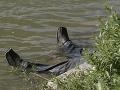 Desivý nález: Pri Hronskej Dúbrave našli mŕtvolu muža