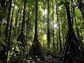 Ďalší objav preslávil Slovensko na celom svete: Výskumník našiel les s chodiacimi stromami