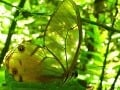 V ekvádorskom pralese žije aj nesmierne množstvo zaujímavých druhov živočíchov