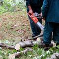 Nehoda pri pílení, muža zabil konár