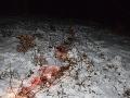 Policajt v civile sa poriadne predviedol: Krvavé stopy ho doviedli priamo k páchateľovi