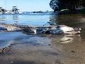FOTO Na breh jazera vyplavilo prazvláštnu kreatúru: Nevydarená mutácia krokodíla s delfínom