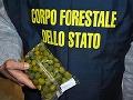olivy boli na zlepšenie ich farby prifarbované síranom meďnatým