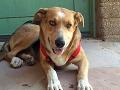 Predajca v Košiciach sa vzbúril proti močeniu psov: Originálne sa vynašiel, FOTO vnútri