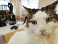 Inšpektori v Japonsku sú znepokojení stavom mačacej kaviarne: Urobili zásadný krok
