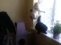 Pomsta majiteľa? VIDEO Domácim mačkám privodil humorista doživotnú traumu