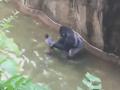 Zabitie gorily kvôli chlapcovi vyvolalo rozhorčenie: Zbytočná smrť, na vine sú zoo a rodičia!
