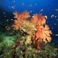 Google ponúkne pohľad na svet pod hladinou oceánov