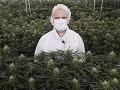 Môže pomôcť marihuana v
