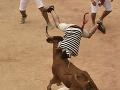Španielska tradícia sa zmenila na horor: Býk nabral na roh Američania, štyria sa zranili
