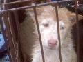 Odhalenie beštiálnych praktík na Slovensku: Škandalózne kšefty s mäsom nevinných psov