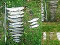 Ľudia sa zľakli riečnej záhady na FOTO: Tisíce rýb postihla v rovnakom čase biblická skaza