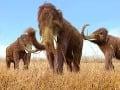 Prekvapivý záver najnovšej štúdie: Posledné mamuty zomreli od smädu