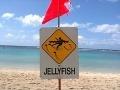 Varovanie, týmto plážam sa radšej vyhnite: Číha na nich smrteľná hrozba