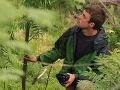 Ochranár o apokalypse slovenskej prírody: Po kalamite nabral výrub lesa obludné rozmery