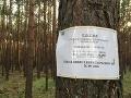 Na Záhorí platí zákaz zberu húb a lesných plodov na FOTO: V lese už nepočuť ani vtáčika
