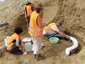 FOTO Jedinečný objav blízko Slovenska: Vedci našli obrovského mamuta spred milióna rokov