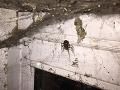 Slovák v garáži objavil hororového pavúka na FOTO: Príbuzná čiernej vdovy, hovorí odborník