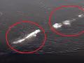 Na Aljaške sa objavilo záhadné monštrum: VIDEO podivného tvora v ľadovej rieke