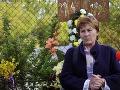 Hlasovanie o Mečiarových amnestiách: Drsný odkaz matky zavraždeného Remiáša, zrada!