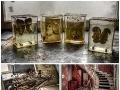 FOTO: Tam, kde noha nevkročila 30 rokov: Nahliadnite do opusteného domu mŕtveho urológa