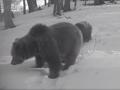 VIDEO z Veľkej Fatry vyvracia rozšírený mýtus: Vysvetlenie, prečo medvede túto zimu nespia