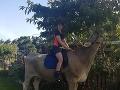 VIDEO Na narodeniny chcela koňa, rodičia jej dali niečo lacnejšie