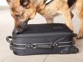 Ochrankárom na letisku ušiel psík na FOTO: Odporný čin policajtov, spravili s ním krátky proces!