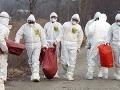 Potvrdili ďalšie ohnisko vtáčej chrípky: Vážne nebezpečenstvo pre chov zvierat a zdravie ľudí