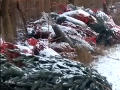 Erik ostal totálne zaskočený: VIDEO Na prechádzke lesom objavil ukrytú vianočnú pohromu