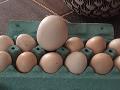 Mária (64) našla v kuríne podivné vajce: Vo vnútri sa ukrývalo prekvapenie na FOTO