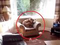 Majiteľ sledoval stopy deštrukcie, ktoré nechal pes v byte