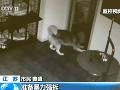 Huskyho držali v klietke: VIDEO jeho úteku, zachránil ďalších psov